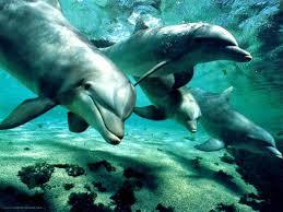 dofins 2