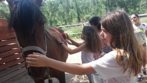 cavalls1