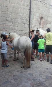 netegem cavalls2
